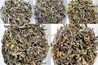 Darjeeling First Flush 2020  SET-  5x25 g